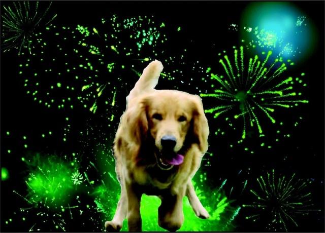 azul-ambientalistas-cuidados-para-nuestros-perros-en-las-fiestas-decembrinas-01
