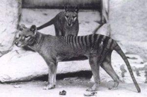 Azul-Ambientalistas-Animales-Extintos-01
