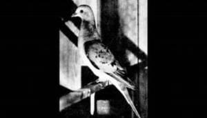 Azul-Ambientalistas-Animales-Extintos-03