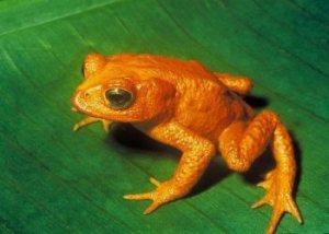 Azul-Ambientalistas-Animales-Extintos-04