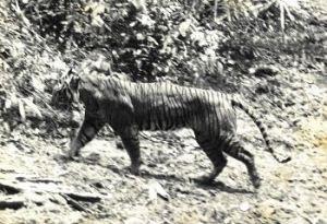 Azul-Ambientalistas-Animales-Extintos-08
