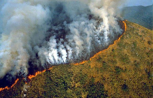 Azul-Ambientalistas-El-ecosistema-mas-vulnerable-a-los-cambios-por-la-intervencion-del-homb