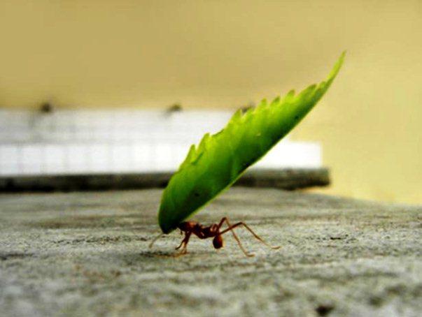 Azul-Ambientalistas-La-importancia-de-las-hormigas