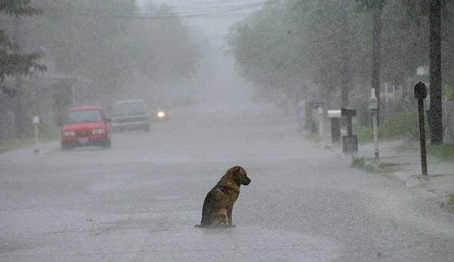 Azul-Ambientalistas-La-triste-historia-de-un-perro-abandonado
