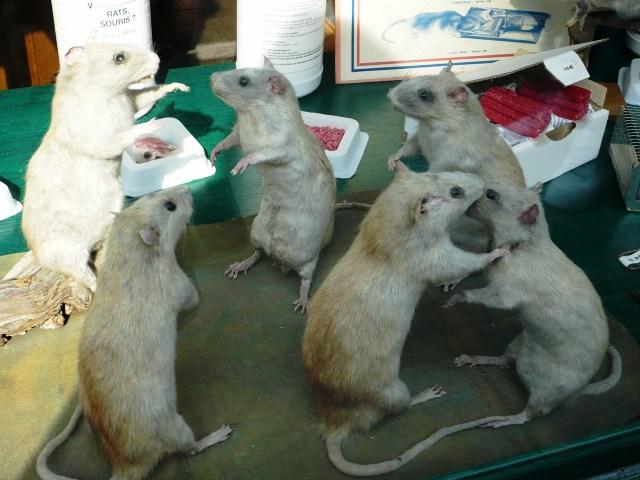 Azul-Ambientalistas-Ratas-Comunicandose