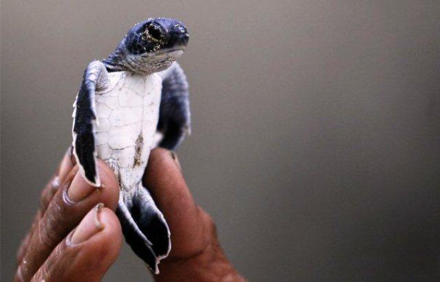 Azul-Ambientalistas-Nos-quedamos-sin-tartugas-marinas