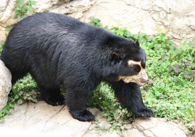 Azul-Ambientalistas-Animales-en-Peligro-de-Extincion-en-Venezuela-01
