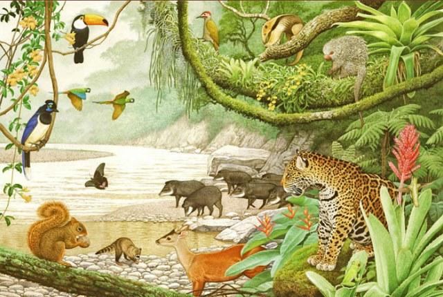 Azul-Ambientalistas-Biodiversidad-amenazada-en-Sudamerica