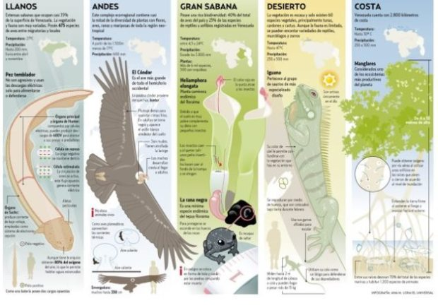 Infografía de Ana Lora, Diario El Universal, donde destaca algunas de las especies resaltantes en la Biodiversidad Venezolana. Si deseas ver la misma en tamaño real, solo haz clic sobre la imagen. Hay una versión animada que puedes verla en el siguiente enlace: http://bit.ly/11Piwzo (Favor copiar y pegar el enlace en tu navegador favorito)