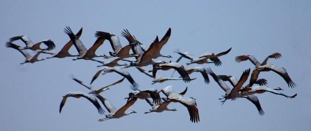 Azul-Ambientalistas-Dia-Mundial-de-las-Aves-Migratorias-2013