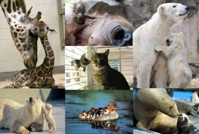 Azul-Ambientalistas-Madres-del-Reino-Animal