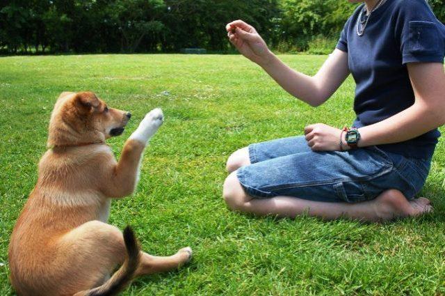 Azul-Ambientalistas-Las-5-reglas-básicas-para-educar-a-tu-perrito