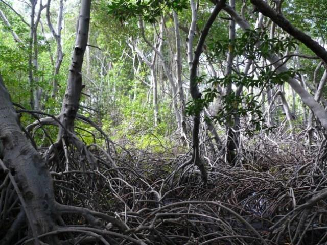 Tierra-de-Suenos-el-Primer-Parque-Ecoturistico-del-Zulia-esta-de-Aniversario-002