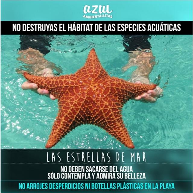 00 Estrella de Mar 002