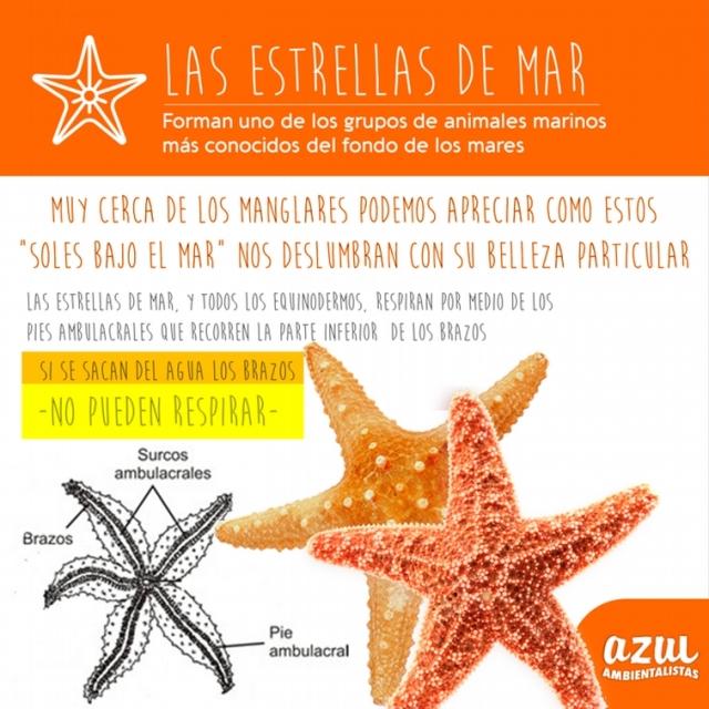 00 Estrella de Mar 003