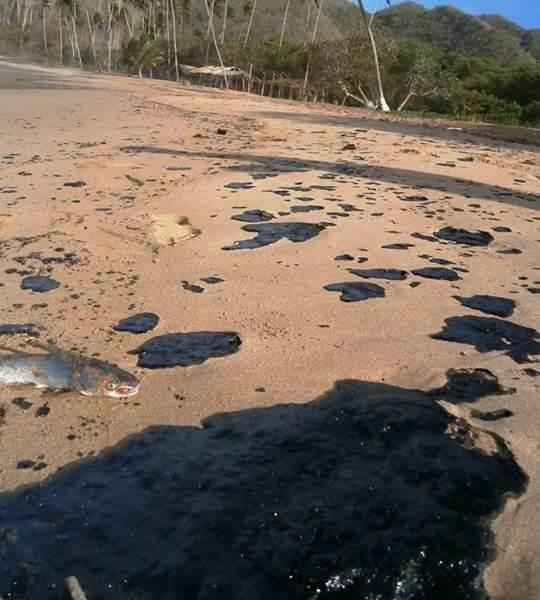Posición de las ONG acerca del desastre petrolero que afecta gravemente las costas del estado Nueva Esparta