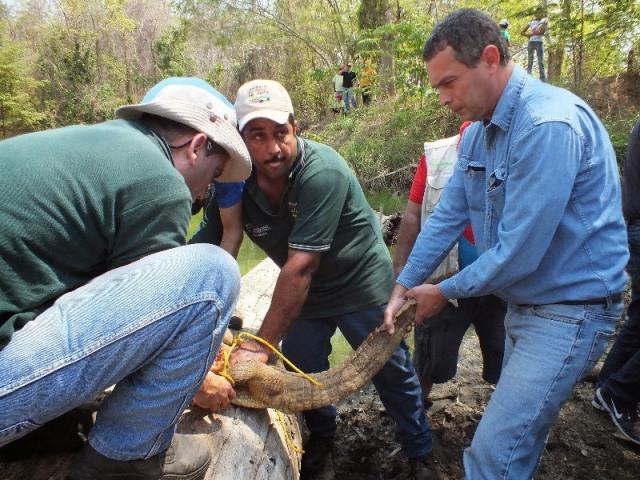 Comercio Ilegal de Especies de Fauna Silvestre en Venezuela: ¿qué hacer?