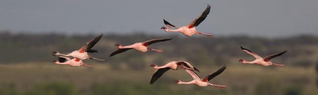 """Día Mundial de las Aves Migratorias 2012: """"Las Aves Migratorias y la Gente, Juntos a través del tiempo"""""""