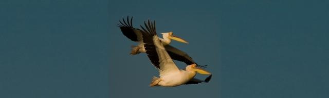 """Día Mundial de las Aves Migratorias 2013: """"Creando redes para conservar las aves migratorias"""""""