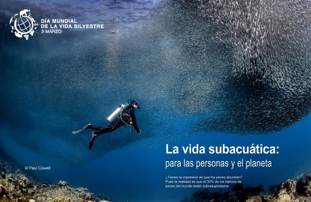 """Día Mundial de la Vida Silvestre 2019, """"Vida subacuática: para las personas y el planeta"""""""